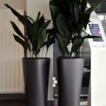 huren-planten-garage2