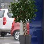 huren-planten-garage6