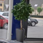 huren-planten-garage7