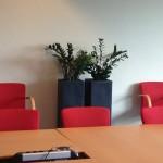 huren-planten-kantoor1