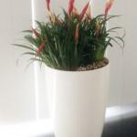 huren-planten-kantoor2