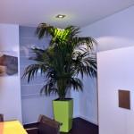 huren-planten-kantoor5