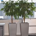 huren-planten-kantoor7