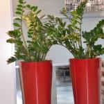 huren-planten-kantoor8