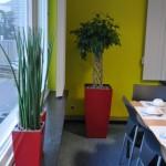 huren-planten-kmo1