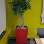 huren-planten-kmo4