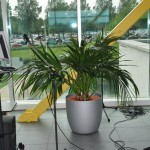 huren-planten-office1