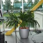 huren-planten-office1