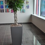 huren-planten-office2