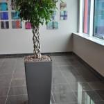 huren-planten-office2