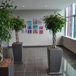 huren-planten-office3