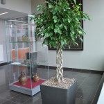 huren-planten-office4
