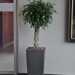 huren-planten-office5