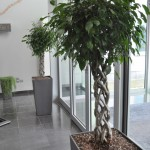 huren-planten-office6