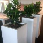 planten-burelen-1