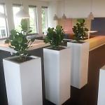 planten-burelen-4