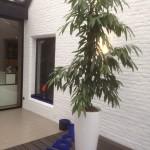 planten-burelen-scala1