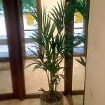 planten-burelen-scala2