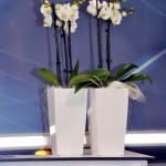 planten-huren-beurs2