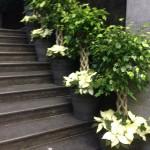planten-huren-evenement1