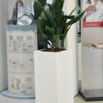 planten-huren-winkel1