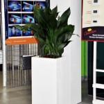 planten-huren-winkel3