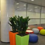 planten-kantoor1