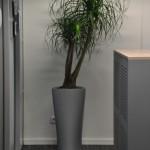 planten-kantoor11