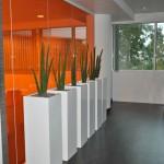 planten-kantoor12