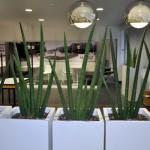planten-kantoor13