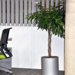 planten-kantoor17