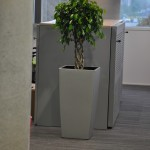 planten-kantoor2