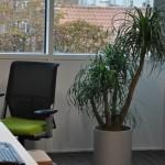 planten-kantoor3