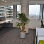 planten-kantoor4