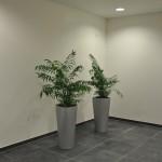 planten-kantoor5