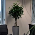 planten-kantoor8