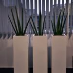planten-kantoor9