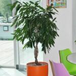 project-planten-kleur1