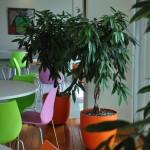 project-planten-kleur2