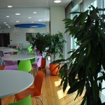 project-planten-kleur3