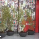 Planten verhuur Gent