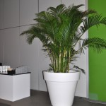 verhuur-planten-hall5